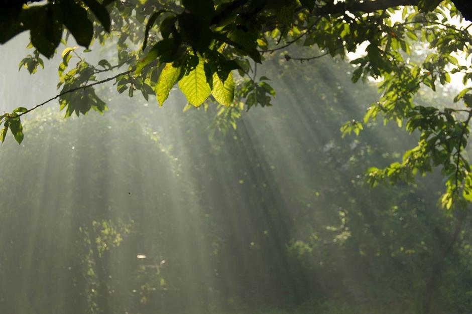 Les rayons de soleil
